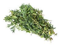 bundle of fresh hyssop (hyssopus) herb isolated