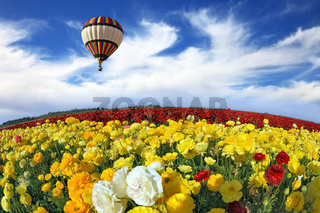 Wonderful spring mood