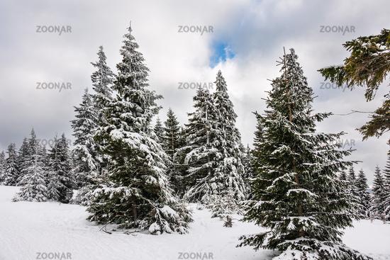 Winter im Riesengebirge bei Pec pod Snezkou, Tschechien