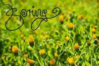 Yellow Flower Meadow, Calligraphy Spring, Summer Season