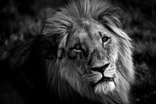 Burden of  a King