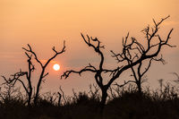 Sunrise in savannah of Africa and Swaziland.
