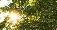 Sonne scheint durch Baum im Sommer als Nachhaltigkeit Konzept