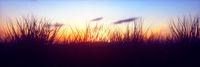 Panoramic Colorful Sunset with closeup grass