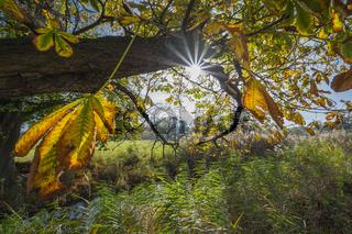 Chestnut tree with sun in autumn