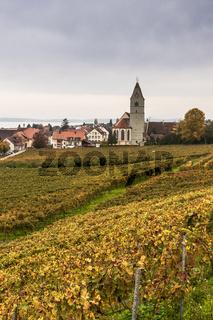 Ausblick auf den Weinort Hagnau am Bodensee mit Kirche und Weinberg im Herbst, Baden-Württemberg, Deutschland