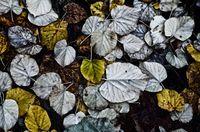 pastellfarbenes Herbstlaub auf dem Waldboden