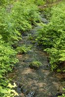Kleiner Bach fließt zwischen Farnen und Schilfgras durch einen Wald