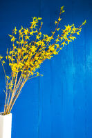Easter Branch With Yellow Blossoms, Spring Decoration, Blue Background