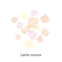Lactococcus probiotics on white