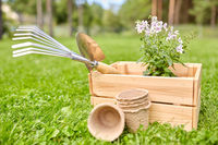 garden tools and flowers in wooden box at summer