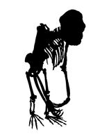 Monkey Full Body Skeleton Isolated Graphic