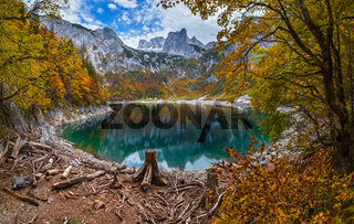 Tree stumps after deforestation near Hinterer Gosausee lake, Upper Austria. Autumn Alps mountain lake. Dachstein summit and glacier in far.