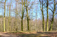 Early Spring Woods