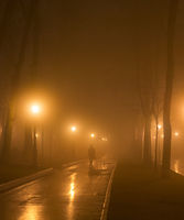 man park fog mist night