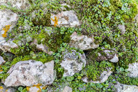 Short mosses collection