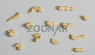 Remouladen Sossen auf einem weißen Hintergrund