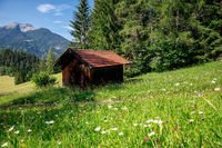 meadow with wildflowers by wooden hut