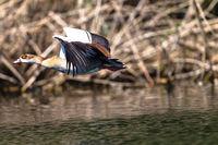 Bird Take-off Flight Water