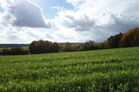 Gründüngung, green manure