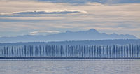 Pappelallee Insel Reichenau, Atlmann und Säntis im Hintergrund