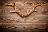 Deer antlers on vintage wooden background