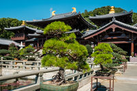 Bonsai trees in Chinese Garden of the Chi Lin Nunnery, a  Buddhist temple in Hong Kong