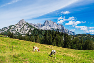 Blick auf die Litzlalm mit Kühen in Österreich