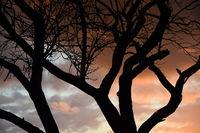 Baum, abends