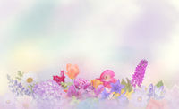 Colorful flowers for background.
