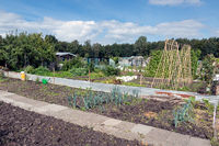 Dutch allotment garden in autumn with bean stakes and leek