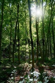 Naturbelassener Wald bei Friedrichsroda