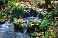 Kleiner Bachlauf im Herbstwald