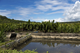 Water Basin in the rural Countryside of Bohol Island