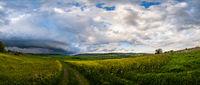 Spring yellow flowering rapeseed fields panorama