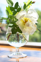 White rose in the wine glass