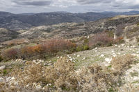 Herbst im Troodos-Gebirge