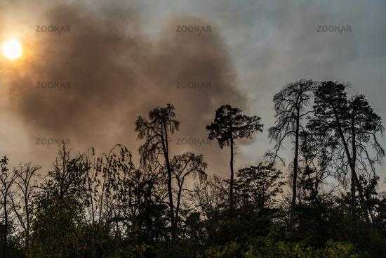 Sonne wird durch Rauch bei einem Waldbrand verdunkelt