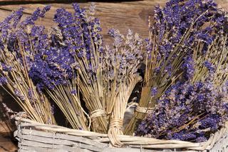 Sommerernte - Lavendel getrocknet im Korb