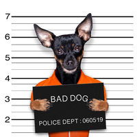 prague ratter dog police mugshot