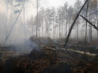 Peatlands are on fire. Forest fire and its consequences