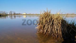 Grasbüschel im flachen Wasser am Ufer der Elbe bei Magdeburg