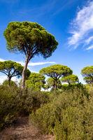 Donana Nationalpark