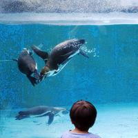K_Zoo_03.tif