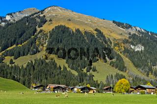 Schutzwald an einem Berghang über den Bauernhäusern der Gemeinde Feutersoey Gsteig,Schweiz