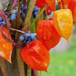 Herbstdeko - deco in fall 02