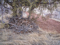 juniper tree and a pile of driftwood at a dry bottom of sand wash