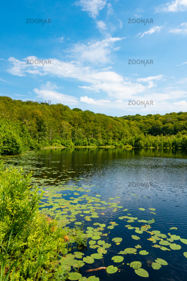 Der schwarze See in Naturschutzgebiet Granitz auf Rügen, Mecklenburg-Vorpommern, Deutschland