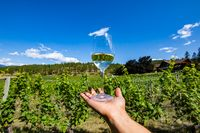 a glass of clear white wine on the hand