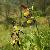 mehrere Orchideen